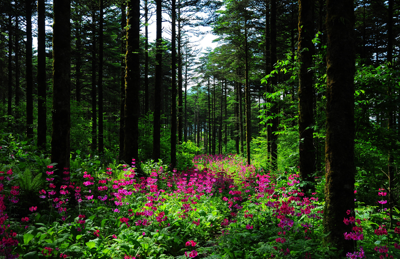 大瓦山国家湿地公园5.jpg